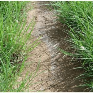 ایجاد پوسته نمک در سطح خاک