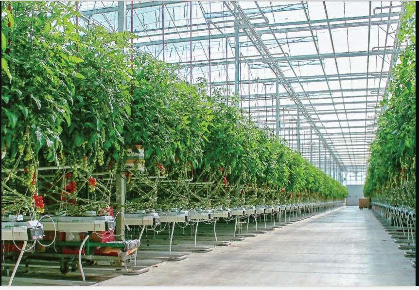 آبیاری هوشمند در گلخانه ها