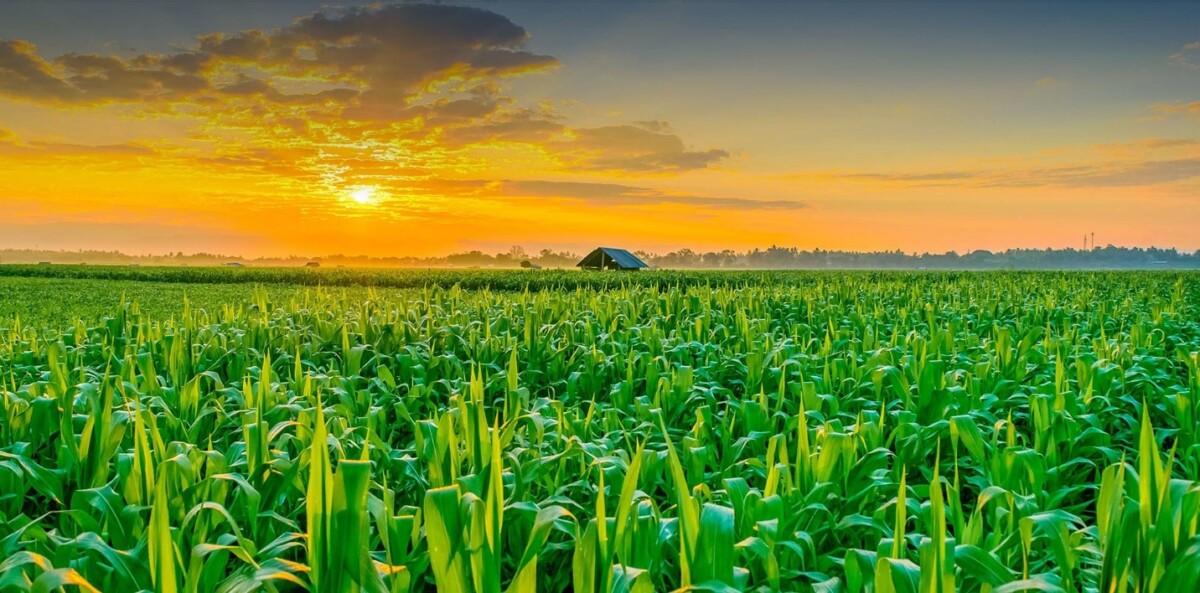 کاربرد آب مغناطیسی در کشاورزی