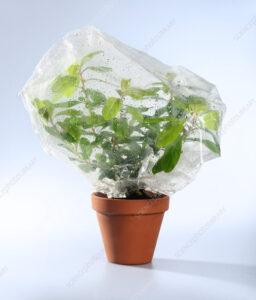 رابطه جذب و تعرق در گیاهان