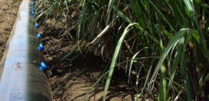 آشنایی با سیستم آبیاری کمفشار